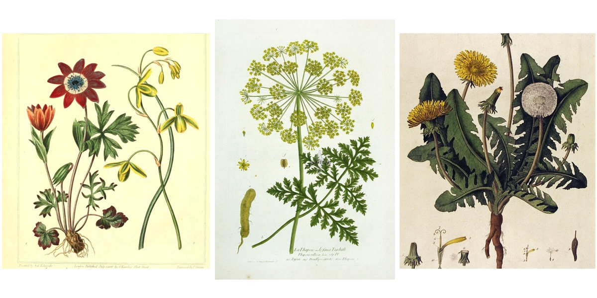 Britta Teckentrup - Botanical Flowers